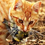 Vogelkiller Windkraft? Erschießt alle Katzen!